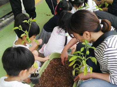 阪神ガーデン「みどりしきん」活動報告1
