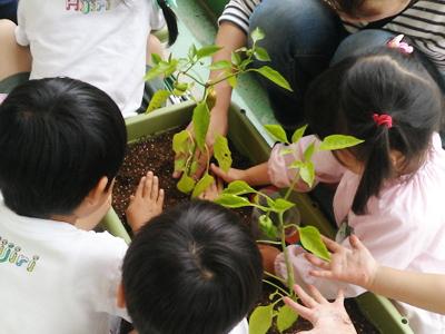 阪神ガーデン「みどりしきん」活動報告2